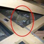 屋根(小屋裏)での結露発生に影響を与える!わずかな天井断熱・防湿の欠損とは?
