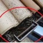 落ち葉などによる樋詰まりの事例紹介!定期的な点検が必要な部分ですね!