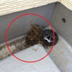 鳥害にお困りの住宅を訪問。 心配ごとの部分(屋根、樋、シャッターボックス)すべてに鳥対策を工夫したよ。