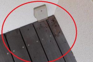 新築時の小動物苦情No.1はコウモリです!瓦屋根の隙間から侵入する事例が多くなっています!!