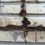 バルコニーの内壁サイディングが凍害による表面剥離発生‼︎