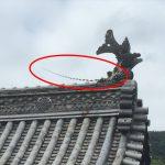 伊勢神宮でめずらしい屋根を発見!レアキャラです!