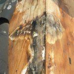 住宅の木材はなぜ腐るの?→答えは「水」があるから。家の長寿命には乾燥が重要です。