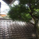 瀬戸市の実家に行きました。