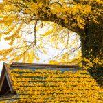 屋根屋が教える!落ち葉の雨樋の詰まりの掃除方法と落ち葉よけグッズの選び方