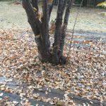 天窓の雨漏り 落ち葉詰まりも原因になりますよ! この時期はご注意くださいね!