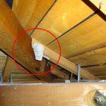 小屋裏に変な巣を見つけました! 何の巣ですか?