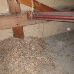 小屋裏の鳥の巣を掃除 屋根工事のついでの頼まれごと!【愛知県岩倉市】