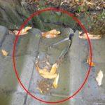 築60年公民館の瓦屋根 台風の飛来物で破損した瓦を部分補修 【愛知県岡崎市】