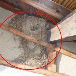 屋根に2センチの隙間があると鳥の巣が。隙間をふさぎましょう!