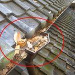 大量の落ち葉が堆積する屋根は毎年掃除を行いましょう!雨どいの掃除も!