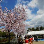 碧海町町内会 桜祭りが開催されました