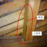 雨漏りによりルートができる!小屋裏でもシロアリを発見しました!