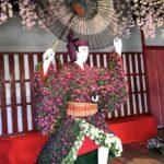 今年も菊まつりが開催されました
