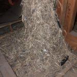小屋裏には小動物の巣があることも!天井上で物音がしたら、点検依頼しましょう!
