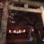 大山公園千本桜ライトアップしてますよ。4月7日までの予定です !(^^)!