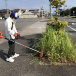 碧南高浜線 街路樹管理ボランティア活動です