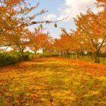 【秋の販売キャンペーン】雨どい用の落ち葉よけシートを大幅値下げ!