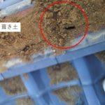 日本瓦屋根の雨漏り のし積み棟部から浸入で部分補修【愛知県岡崎市】