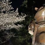 大山緑地公園の千本桜  ライトアップもされてますよ (^o^)/