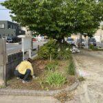 外淵公園清掃活動と街路樹ボランティアの前倒しでした