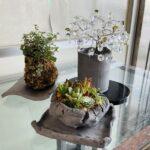 暑い夏は花が枯れてしまうので、苔だまや多肉種の寄せ植えが室内にあると涼しく感じますね (^o^)/