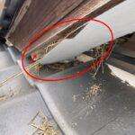 瓦屋根の隙間から鳥の巣 軒天材の隙間を埋めて部分補修 【愛知県小牧市】